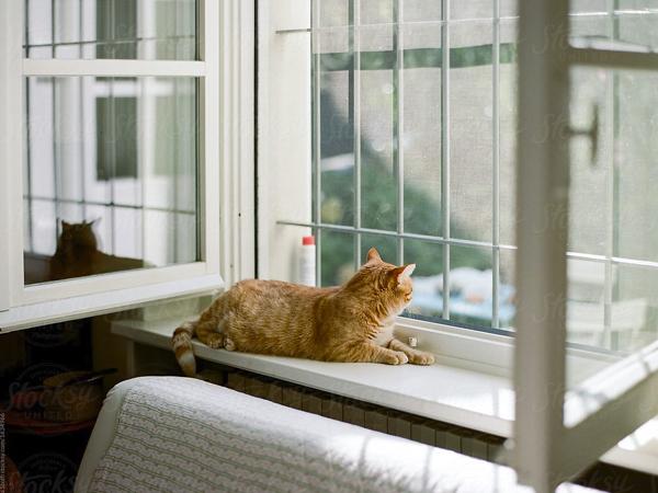 Rejas ventanas en Móstoles